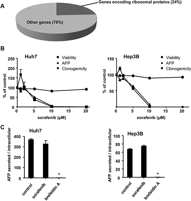Sorafenib alters tumour cell proteostasis, cell viability and the clonogenic growth of HCC cells.