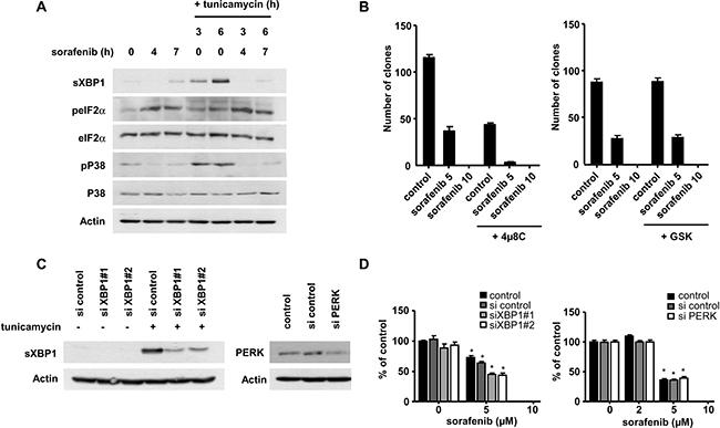 Sorafenib modulates the UPR in HCC cells.