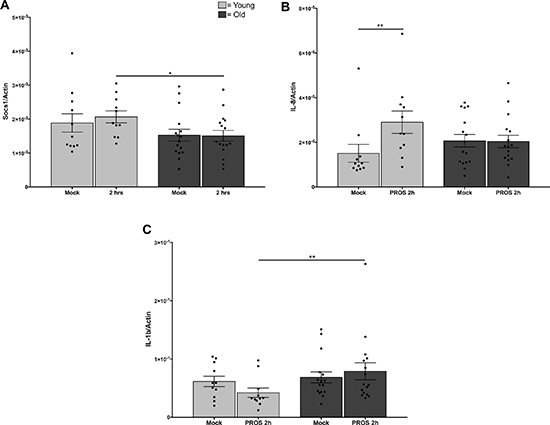 Reduced responses to Mer signaling in monocytes from older adults.