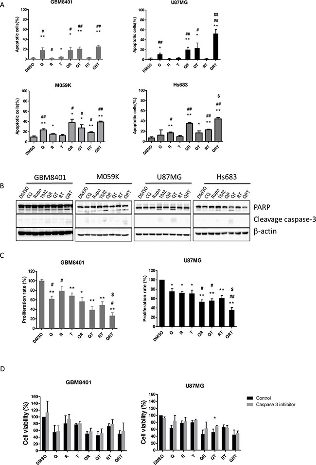 Effect of CQ (Q), Rapa (R) and TMZ (T) in different combination treatment on apoptosis and proliferation in 4 GBM cell lines.