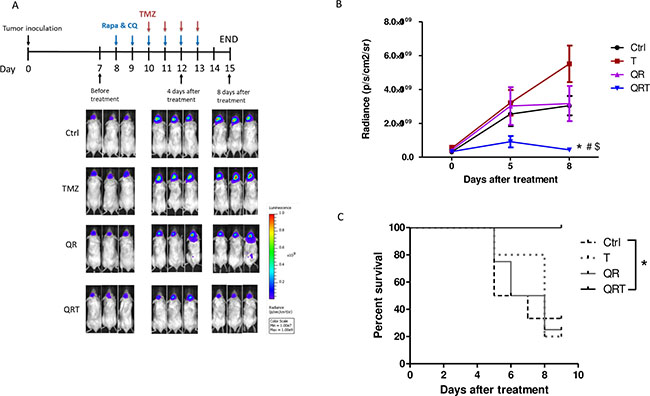 Decreased tumor growth with in vivo treatment of GBM xenograft model monitored by bioluminescence imaging.