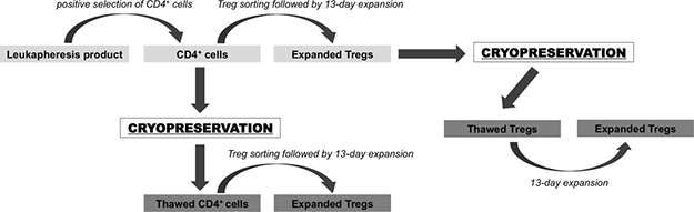 Schema of cryopreservation strategies for Treg therapy tested in the study.