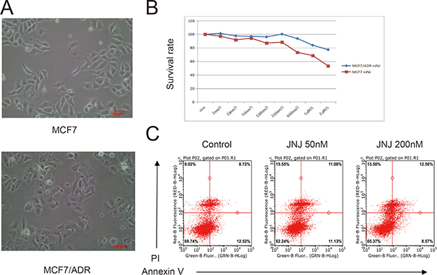 JNJ promotes ADR resistant effects in MCF7/ARD cells.