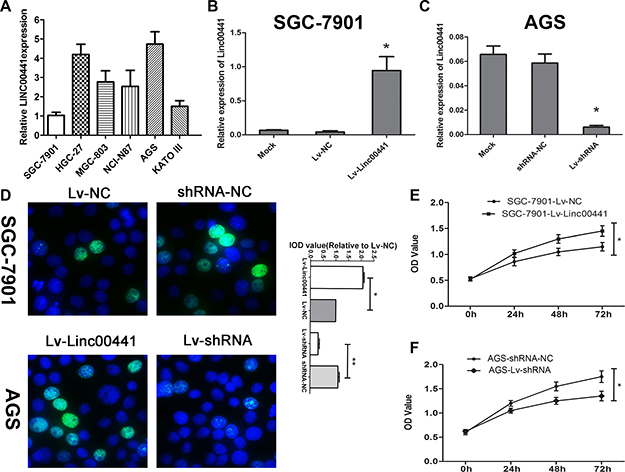 Linc00441 promoted cell proliferation in vitro.