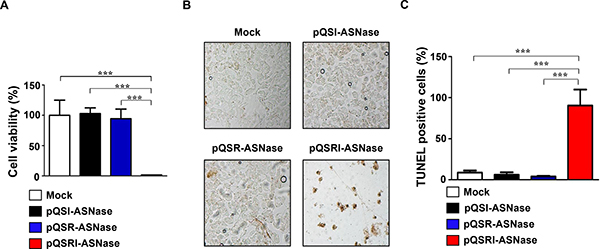 Cytotoxic effect of L-ASNase secreted from Salmonella carrying pQSRI-ASN, pQSI-ASN, or pQSR-ASNase.