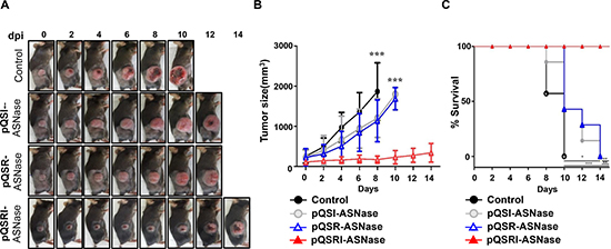 Antitumor effects of Salmonella carrying pQSRI-ASNase, pQSI-ASNase, or pQSR-ASNase in vivo.