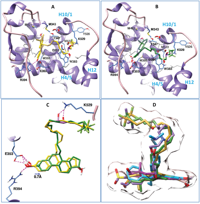 Binding postures of Fulvestrant, ZB716 and three crystal ligands in the antagonistic binding site of ERα.
