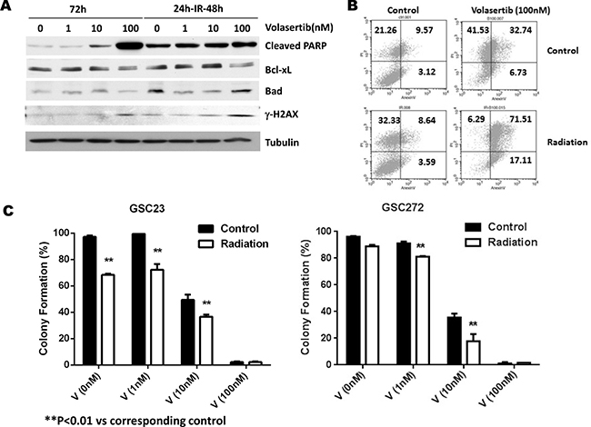 Effects of PLK1 inhibition by volasertib and radiation on apoptosis induction, cell cycle arrest, and clonogenic assay for self-renewal of GSCs.