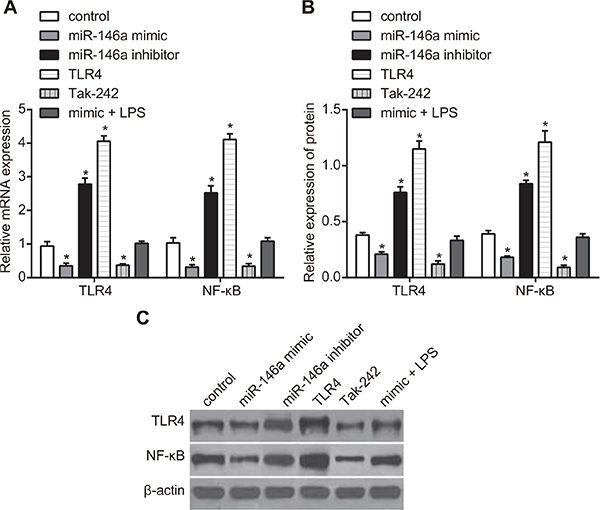 Effect of miR-146a on TLR4 and NF-κB expression in RA-FLSs.