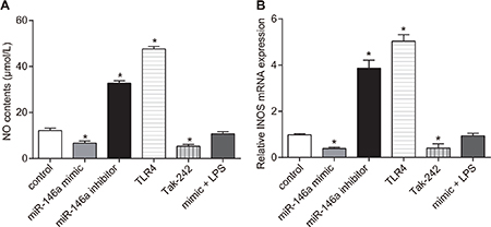 Effect of miR-146a on nitric oxide (NO) levels and inducible nitric oxide synthase (iNOS) expression in RA-FLSs.