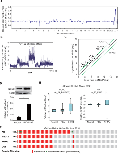 Amplification of the NONO gene in LNCaP-SF cells and CRPC samples.