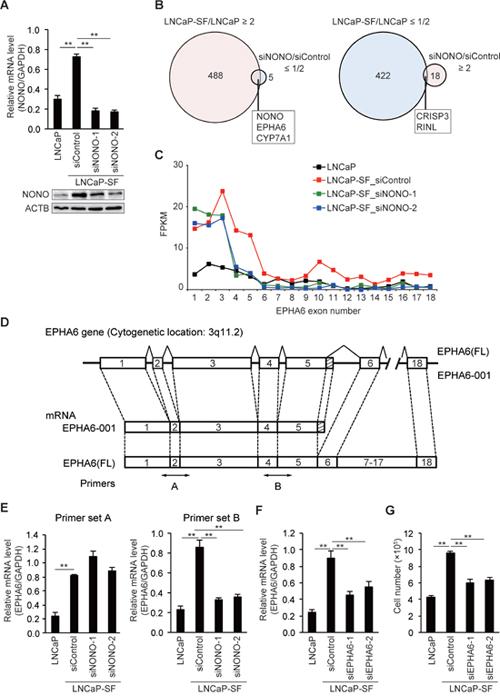 p54nrb/NONO mediates differential splicing of the EPHA6 gene.