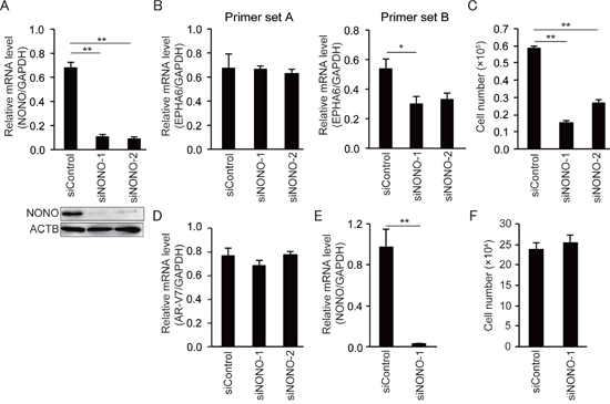 NONO knockdown inhibits growth of 22Rv1 cells but not of HUVECs.