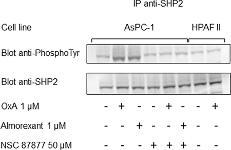 Orexin-A and almorexant promote tyrosine phosphorylation of SHP2/OX1R complex.