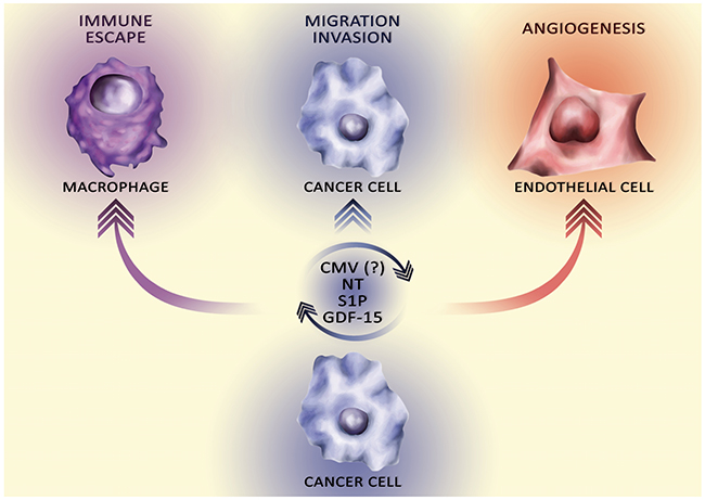 The influence of secretory factors on the 'hallmarks of cancer'.