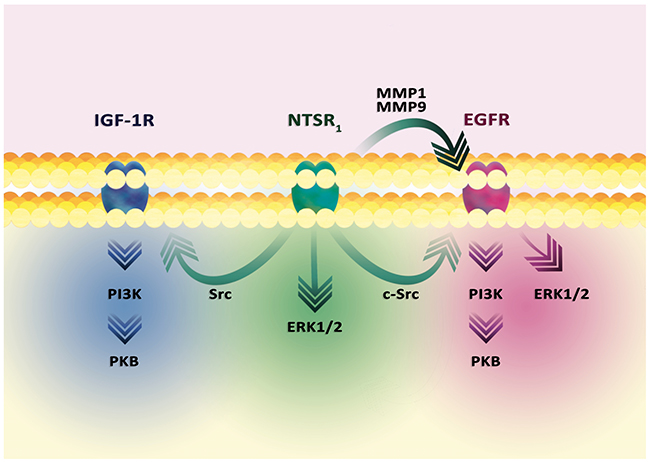 Signal transduction in the tumor cell from the NTSR1 receptor.