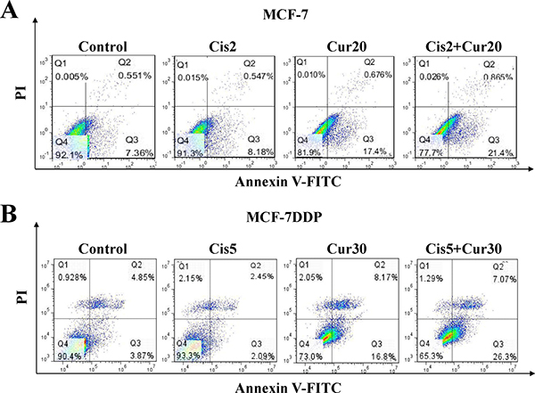 The combination of cisplatin and curcumin stimulates breast cancer cell apoptosis.