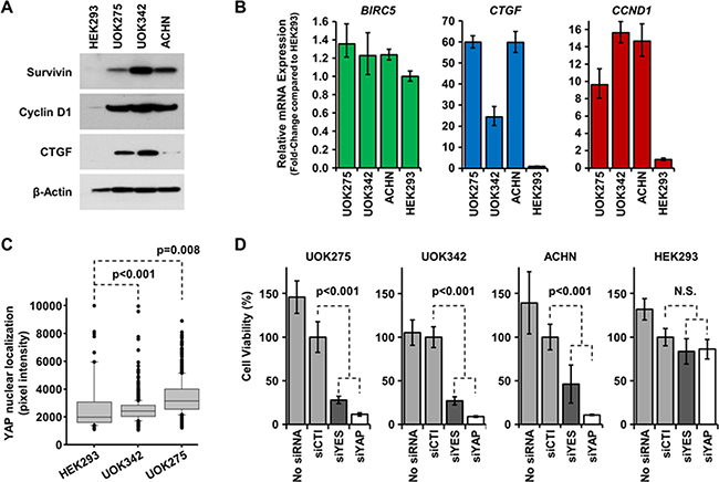 Inhibition of the Hippo pathway is cytotoxic to NF2-deficient tumor cells.