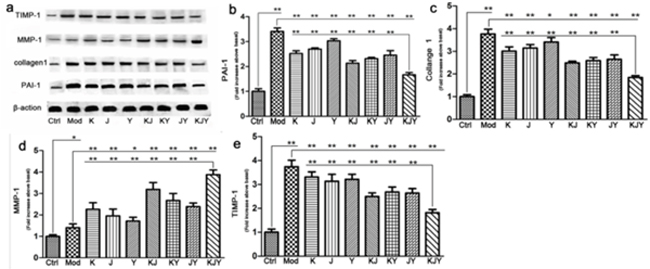 The effects of drug treatment on biomarkers of extracellular matrix in the rat model of chronic renal failure.