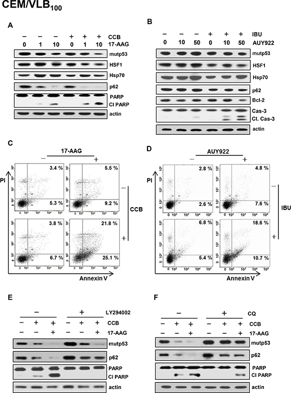 Attenuation of NSAIDs-induced autophagic degradation of mutp53 and apoptosis in MDR cells treated with Hsp90 inhibitor by autophagy inhibition.