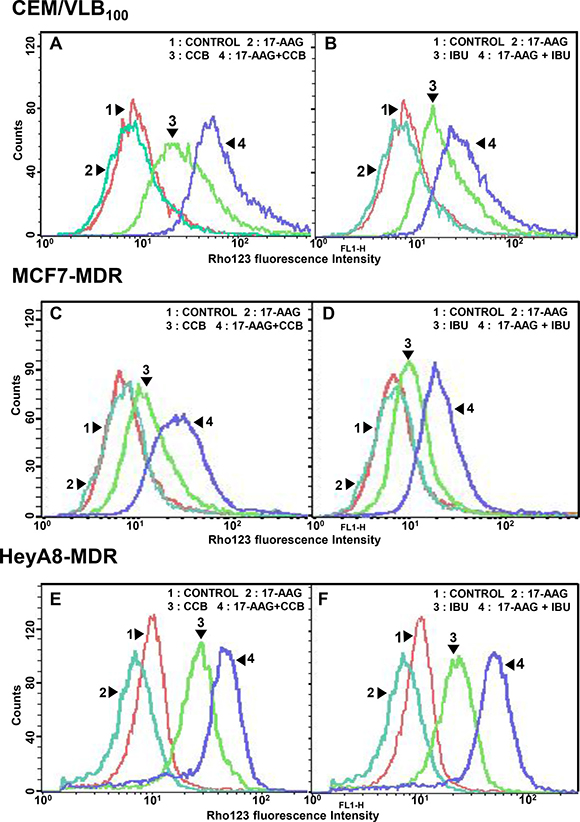Effect of NSAIDs on P-gp-mediated efflux activity of Hsp90 inhibitors in MDR cells.