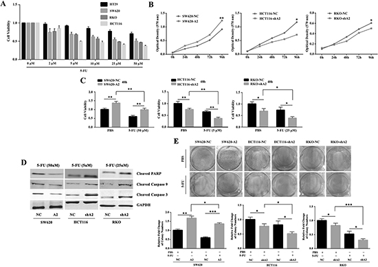 HMGA2 enhances chemoresistance against 5-FU in CRC cells