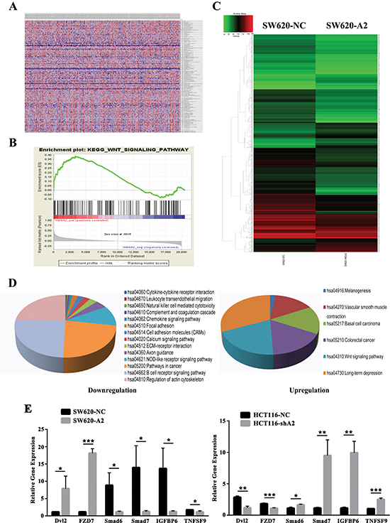 Bioinformatics analysis for cellular signaling regulated by HMGA2.