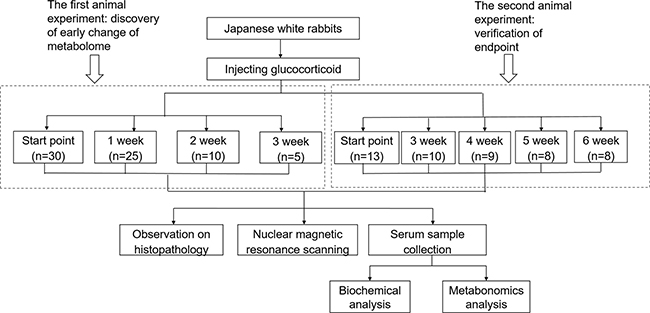 UPLC-MS/MS based roadmap for the serum metabolomics study on toxicity-attenuation effect of glucocorticoid injections in Japanese white rabbits.