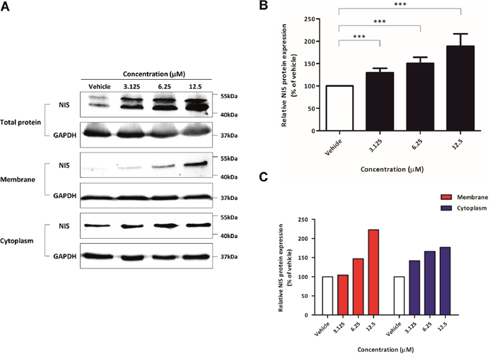 Evaluation of endogenous NIS protein expression promotion, signalling pathways related to re-induction of NIS.