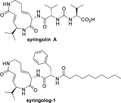 Structure of syringolin A and its synthetic analog, syringolog-1.