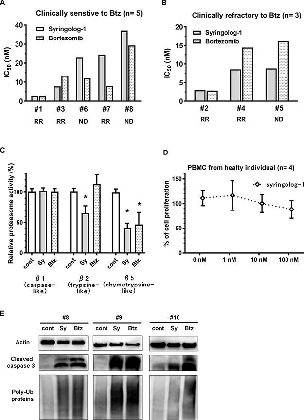 Evaluation of syringolog-1 activity in primary MM cells from patients.