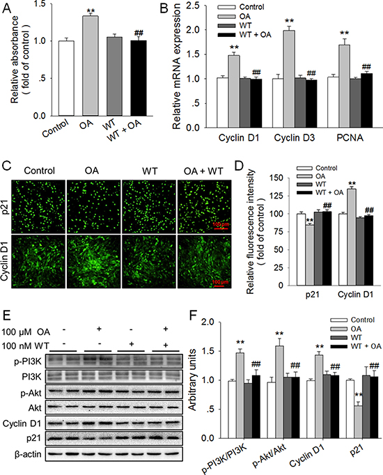 Inhibition of PI3K/Akt totally blocked the promotion of HC11 proliferation induced by OA.