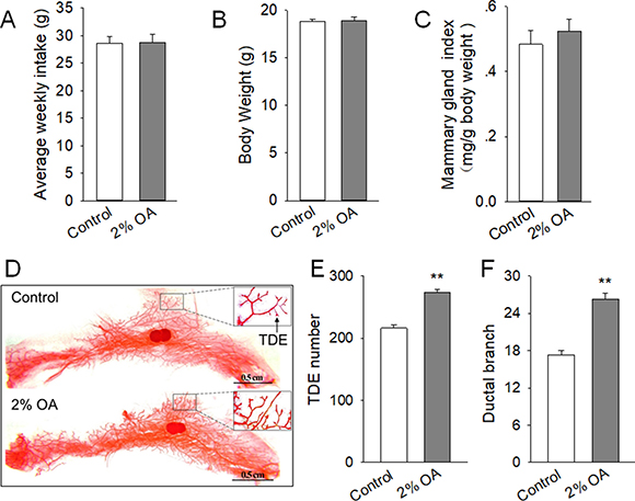 Effects of peripubertal exposure to diet containing 2% OA on mammary duct growth of mice.