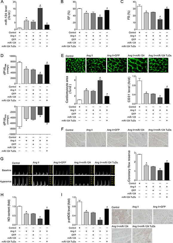 Overexpression of miR-124 aggravated impairment of cardiac function and cardiac angiogenesis induced by Ang II infusion in vivo.
