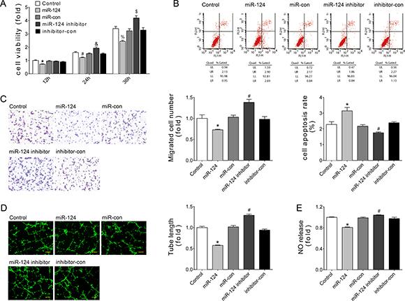 miR-124 reduced angiogenesis of HUVECs in vitro.