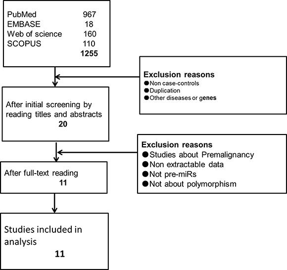 Flow diagram of screening studies.