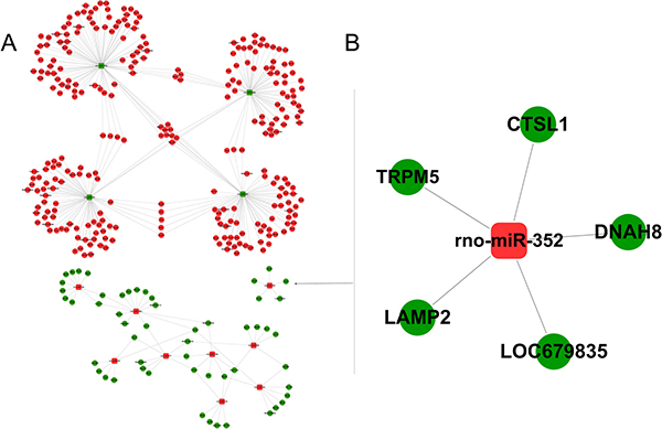 Integrated analysis of miRNA-mRNA co-expression.