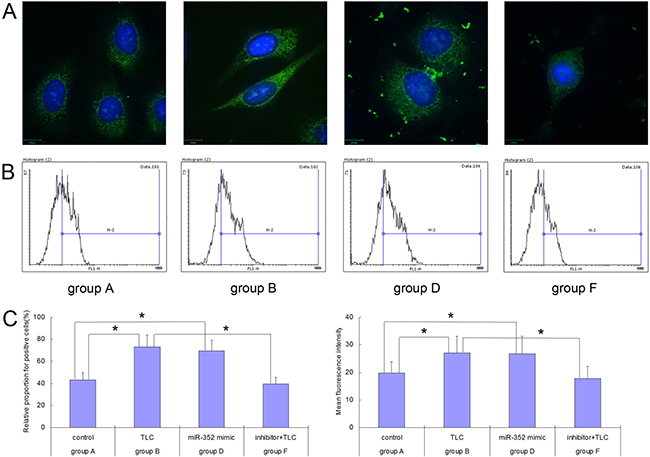 Trypsinogen activation detected in each group of AR42J cells before and after the rno-miR-352 intervention.