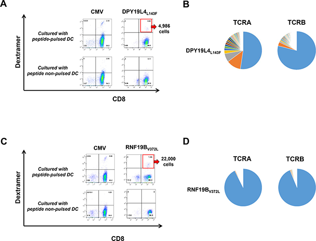 Identification of neoantigen-specific T cells using our rapid screening protocol.