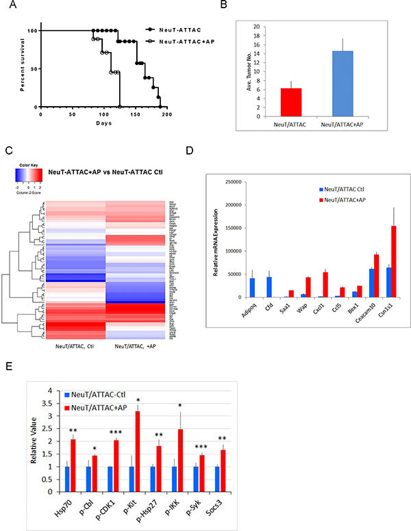 Survival and tumor multiplicity in NeuT/ATTAC mice after induction of fibrosis.