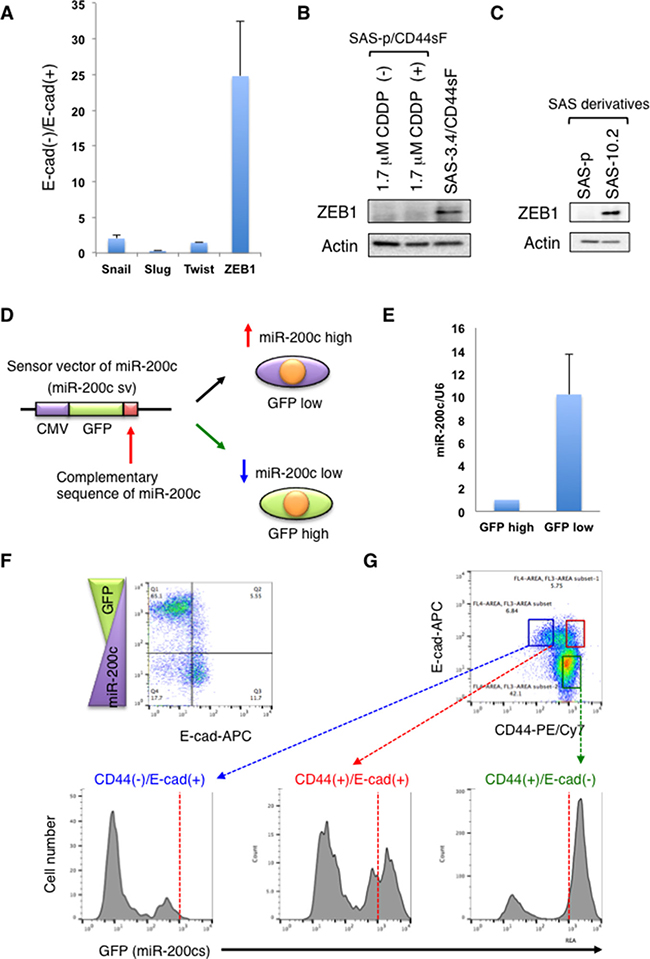 CD44s induces ZEB1 expression by suppressing miR-200c expression.
