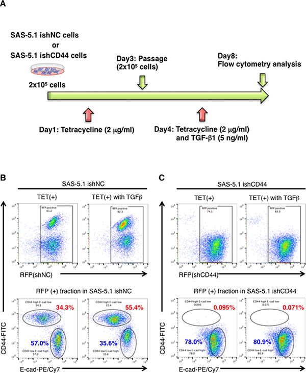CD44s plays an important role in TGB-β1-mediated EMT in CDDP resistant oral cancer cells.