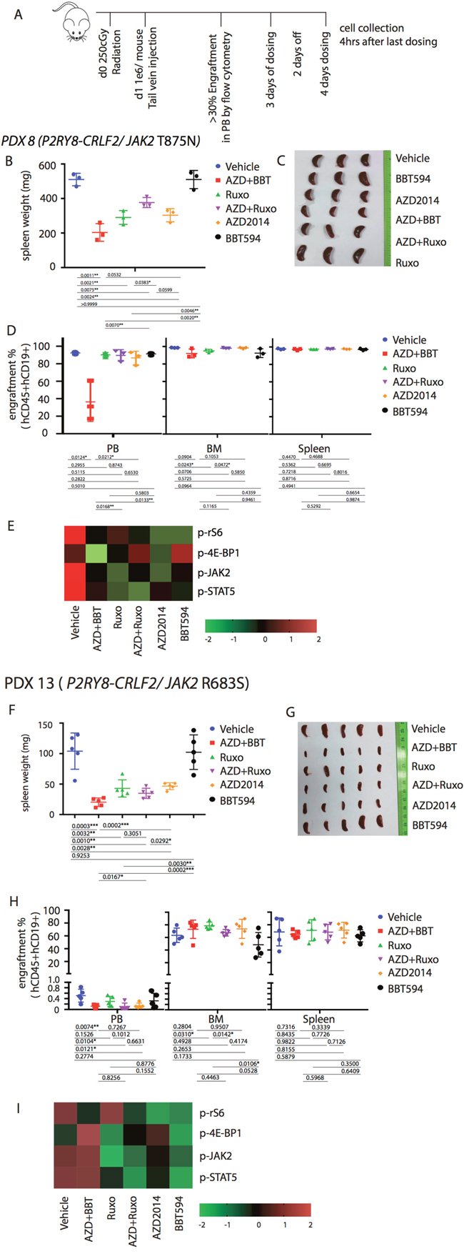 Anti-leukemia efficacy of dual JAK2 and mTOR inhibition in vivo in the P2RY8-CRLF2/JAK2 mutation PDX.