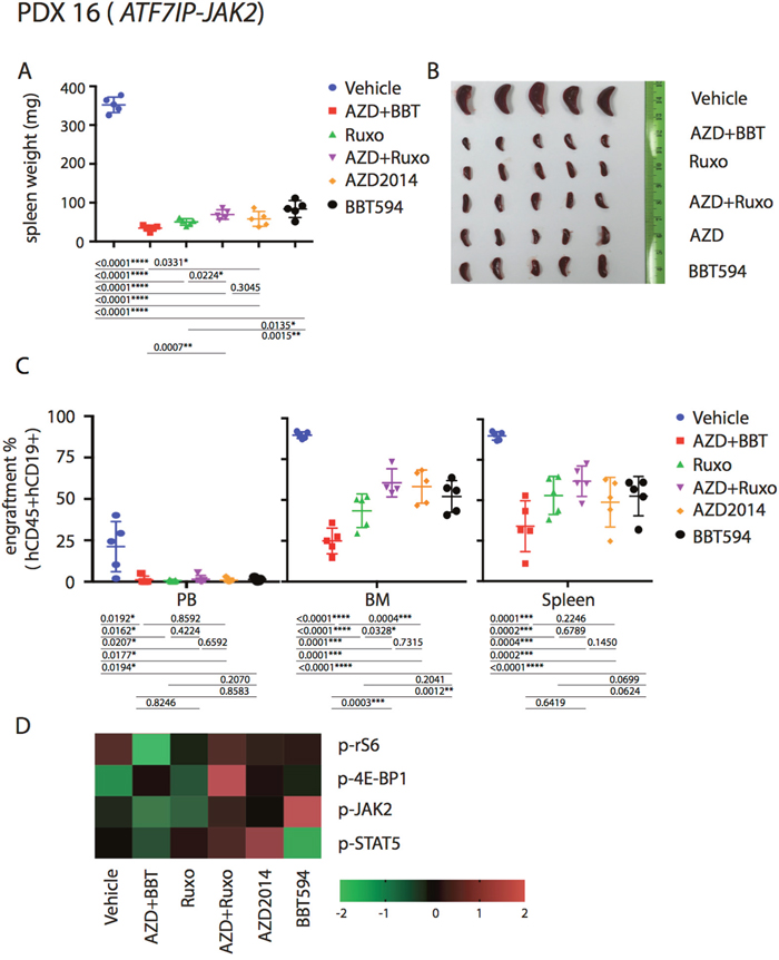 Anti-leukemia efficacy of dual JAK2 and mTOR inhibition in vivo in the ATF7IP-JAK2 fusion PDX.