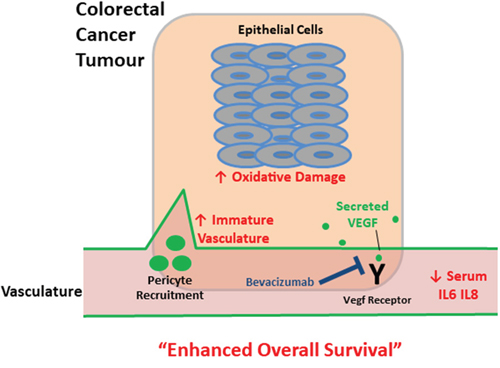 Schematic depicting tumour and serum biomarkers that stratify survival in metastatic colorectal cancer patients following treatment with bevacizumab.
