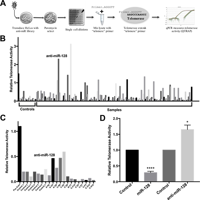 Identification of miR-128 as an inhibitor of telomerase activity.