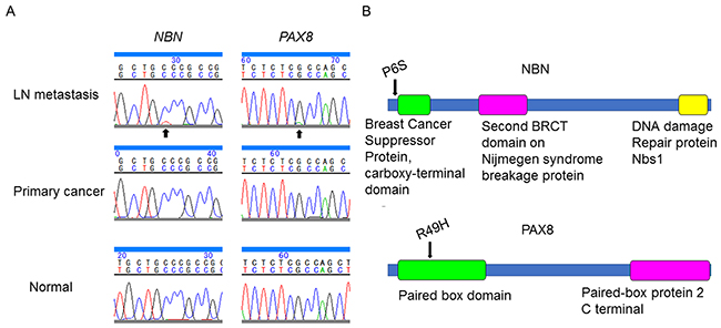 Somatic mutations in NBN and PAX8 identified in the present case.