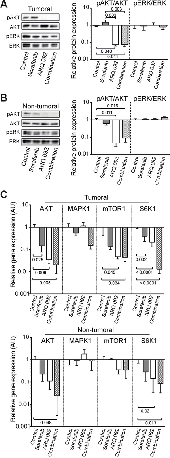 Effect of Combination treatment on AKT and ERK pathways.