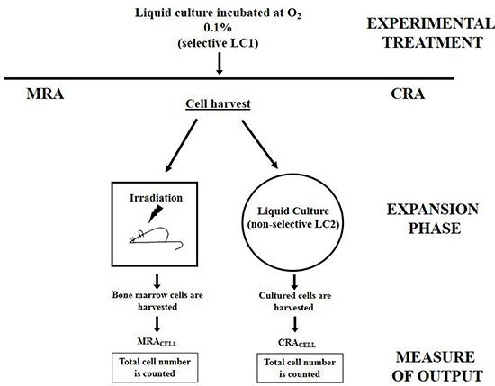 Schematic representation of CRA assay and its cognate MRA assay.