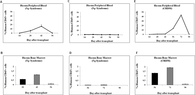 Kinetics of engraftment of BMMC derived from MDS patients in NOD/SCID mice.